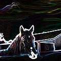 Neon Horse by Shannon Harrington