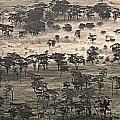 Ngorongoro Crater, Tanzania, Africa by Carson Ganci