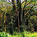 Oahu Rainforest by Iris Vanessa Hood