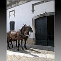 Obidos Horses II Portugal by John Shiron