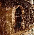 Old Savannah by David Lee Thompson
