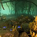 Orange Sponges Grow by Tim Laman