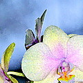 Orchid 1 by Pamela Cooper