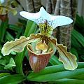 Orchid by Marita Lipke