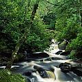 Owengarriff River, Killarney National by Richard Cummins