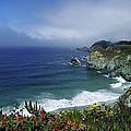 Pacific Coast by Renee Hardison