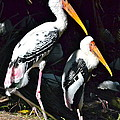 Painted Storks by Carol  Bradley