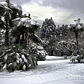 Palm Trees With Snow by Mats Silvan