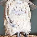 Parrot White by Steven Natanson