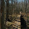 Path Into The Woods by LeeAnn McLaneGoetz McLaneGoetzStudioLLCcom