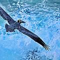 Pelican In Flight by Russ Harris
