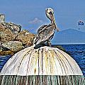 Pelican Power by Lauren Serene