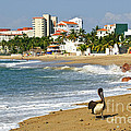 Pelicans On Beach In Mexico by Elena Elisseeva