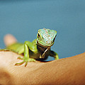 Pet Iguana by Cristina Pedrazzini