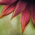 Petals by Bonnie Bruno