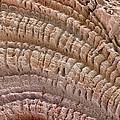 Petrified Wood, Sem by Steve Gschmeissner