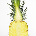 Pineapple Ananas Comosus by Matthias Hauser