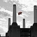 Pink Floyd Pig At Battersea by Dawn OConnor