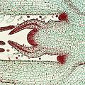 Plant Anatomy by M. I. Walker