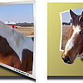 Pony Pose - Gently Cross Your Eyes And Focus On The Middle Image by Brian Wallace