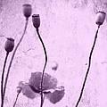 Poppy Art Image by Falko Follert