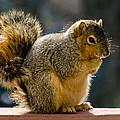 Praying Squirrel  by LeeAnn McLaneGoetz McLaneGoetzStudioLLCcom