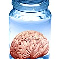 Preserved Brain, Artwork by Victor De Schwanberg