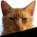 Pretty Kitty by David Lee Thompson