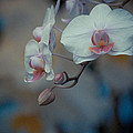 Pretty Pastels by Trish Tritz
