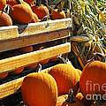 Pumpkins by Elena Elisseeva