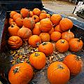 Pumpkins In The Back by Mike Horvath