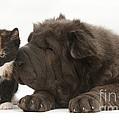 Pup & Kitten Making Friends by Mark Taylor