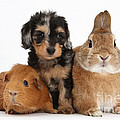 Pup, Guinea Pig And Rabbit by Mark Taylor