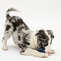 Puppy Playing With A Ball by Mark Taylor