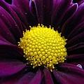 Purple Jewel by Rhonda Barrett