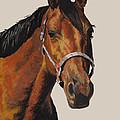 Quarter Horse by Ann Marie Chaffin