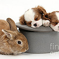 Rabbit And Spaniel Pups by Mark Taylor