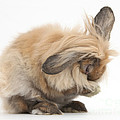 Rabbit Grooming by Mark Taylor