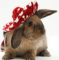 Rabbit Wearing A Hat by Mark Taylor