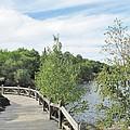 Ramsey Lake Boardwalk by Ian  MacDonald