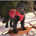 Ready To Sled by Susan  Lipschutz
