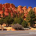 Red Canyon by Angela Q
