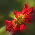 Red Flower by Cliff Norton