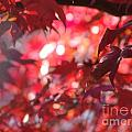 Red Leaves 3 by Rod Ismay