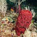 Red Sponge by Jean Noren