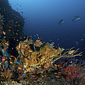 Reef Scene With Coral And Fish by Mathieu Meur