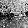 Reflections On The North Fork River In Black And White by Rob Hans