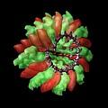 Ribgrass Mosaic Virus, Computer Model by Ucsf Chimera