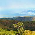 Rinca Panorama by MotHaiBaPhoto Prints