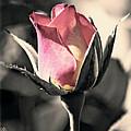 Rita Rosebud Pink by Linda Dunn